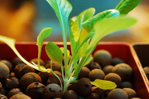 photo:  hydroponics.homehydroponics.info