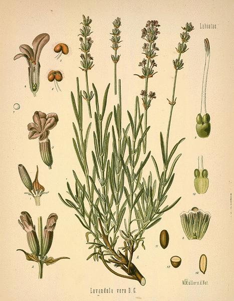 image:  botanical.com