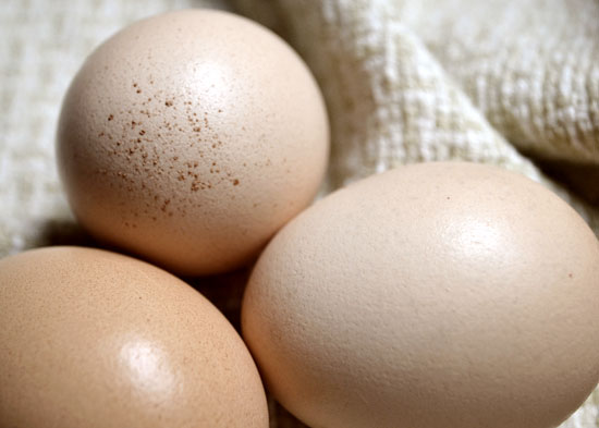 brown eggs photograph