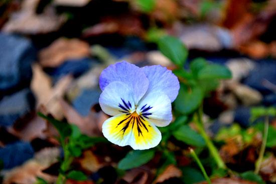 flower in gravel