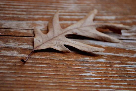 oak leaf on wood