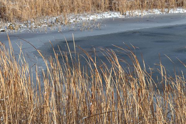 frosty pond