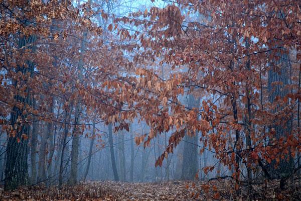 misty woods walk
