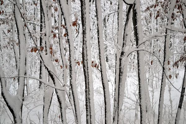 white grove