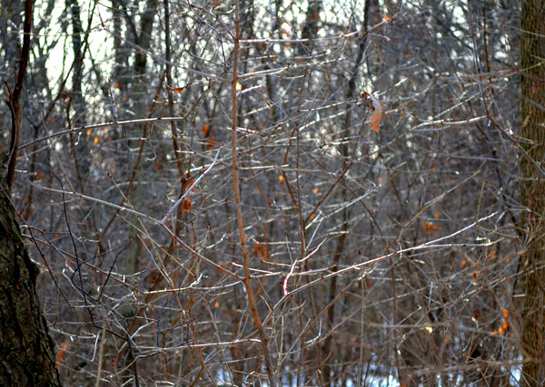 thicket in the sun