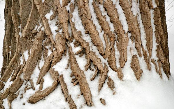 tree trunk bark