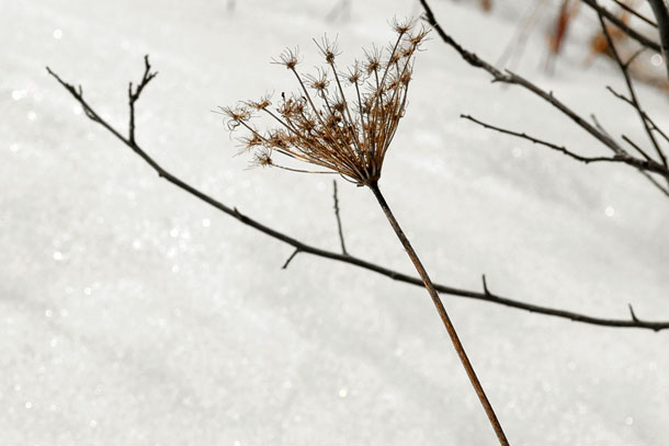 sparkle snow branch