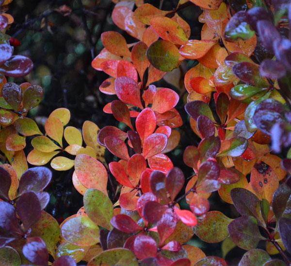 shrub rainy morning
