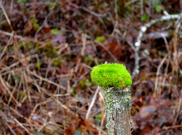 mossy on fence post
